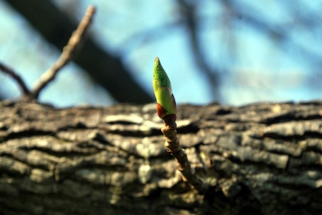 twig-18078_1280